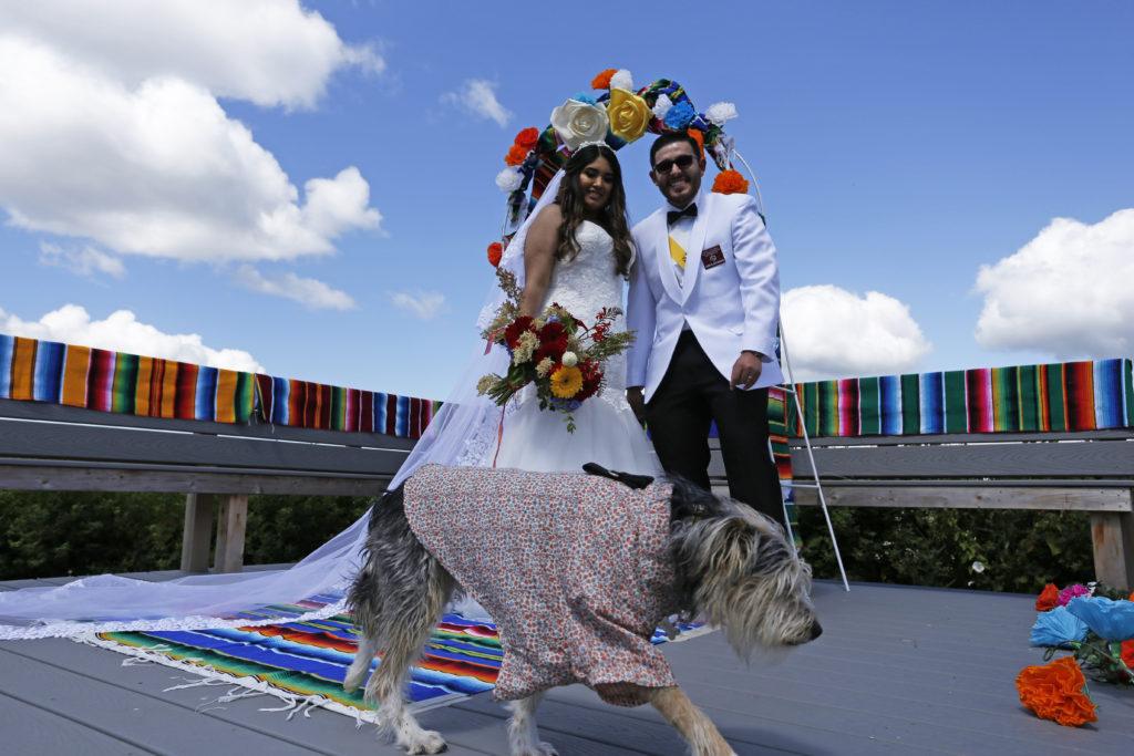 dog in beach wedding in Anacortes, Washington